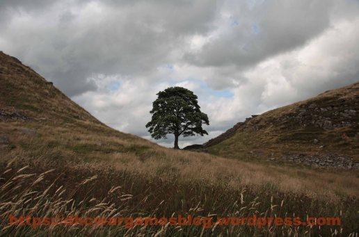 Robin Hood Tree (Sycamore Gap) at Hadrians Wall